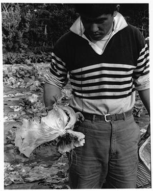 茨城の岩井の、親子3代のレタス生産農家。畑で取れたレタスを手に
